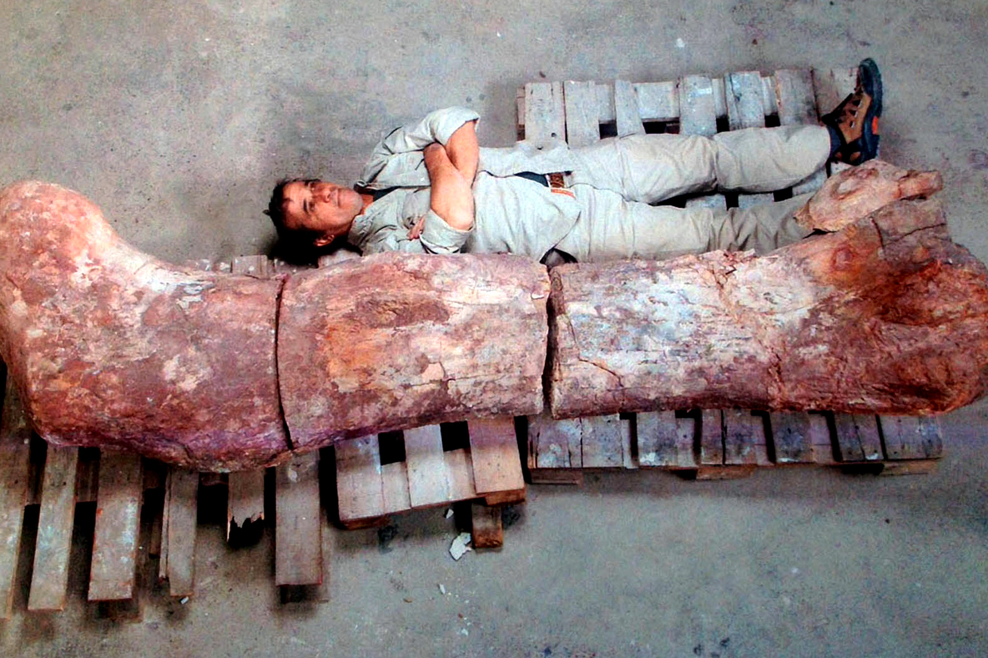 New Dinosaur Found That's Bigger Than Any Dinosaur Ever Discovered